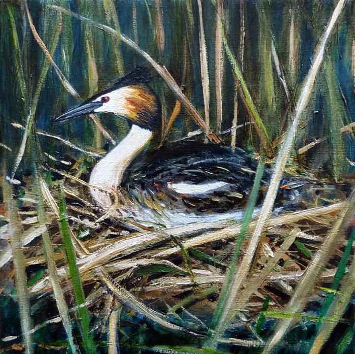 painting grebe on nest, schilderij, fuut op nest