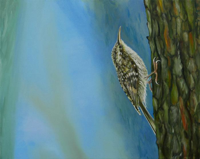Boomkruiper III / Short-toed Treecreeper III (2018) oil on canvas, 40 x 50 cm