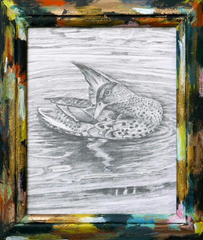 drawing of mallard, tekening van eend