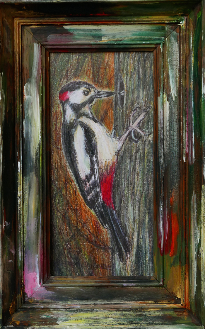 Grote bonte specht VIII / Great Spotted Woodpecker VIII (2018) color pencil, ballpoint on paper, oil on frame, 27 x 17 cm