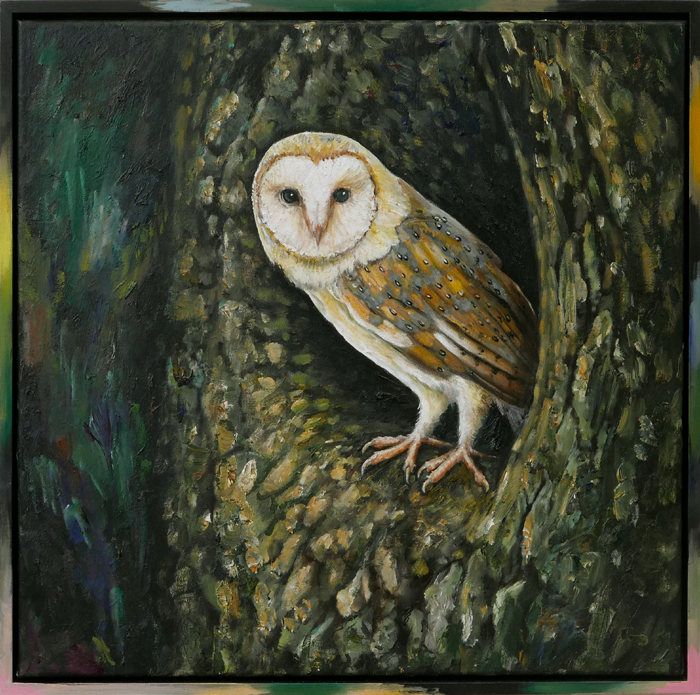 Kerkuil VI / Barn Owl VI (2018) oil on canvas and frame, 53 x 53 cm